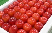 Cherry Nhật đắt kỷ lục, về Việt Nam giá 6,6 triệu đồng/kg