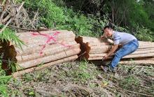Phát hiện nhiều cây gỗ lớn bị triệt hạ ở khu vực biên giới
