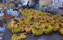 Cận cảnh hàng tấn rau, quả hỗ trợ thú ở Thảo Cầm Viên