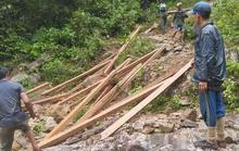Lâm tặc ngang nhiên phá rừng phòng hộ, vận chuyển gỗ giữa ban ngày