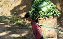 Rụng tim với những thức quà bà con huyện nghèo gửi xuống Đà Nẵng