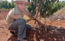 Vụ tàn sát hàng trăm cây ăn trái ở Bà Rịa - Vũng Tàu: Hỏa tốc đề nghị điều tra