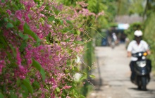 Có một con đường đầy hoa mọc dại tuyệt đẹp ở TP HCM