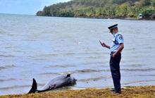 Cá heo mẹ hấp hối vẫn cố cứu con trên vùng biển bị tràn dầu