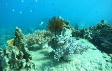 Đa dạng sinh học biển gặp nhiều thách thức
