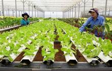 Về Đà Lạt, ăn rau sạch tại vườn