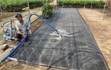 ĐBSCL trữ nước ngọt để tránh hạn
