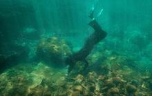 Tình nguyện lặn biển trồng san hô