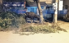 Bắt băng gây 17 vụ trộm trâu, bò khắp các vùng quê Đông Nam Bộ