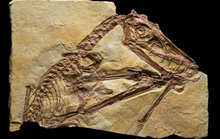 Kinh hoàng quái vật khỏa thân biết bay, ăn thịt cả khủng long
