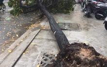 Xử lý cây xanh ngã đổ: Làm công khai thì không ngại dư luận!