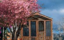 Nơi ngắm hoa xuân ở Đà Lạt