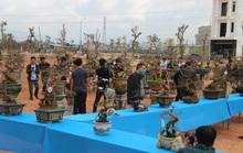Mãn nhãn với hàng trăm tuyệt tác tại hội thi mai vàng ở Bình Định