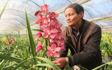 Hoa Trung Quốc gắn mác hoa Tết Đà Lạt