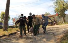 Cả làng kéo nhau lên UBND xã khênh heo về ăn Tết