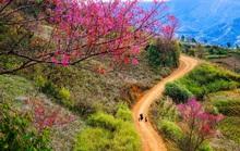 Làm báo cùng Báo Người Lao Động: Lạc bước giữa miền hoa Xuân Tây Bắc