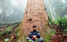 Ngắm rừng sa mu, pơ mu hơn 1.000 năm tuổi giữa đại ngàn