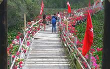 Thỏa sức check in chiếc cầu tre dài nhất Việt Nam giữa rừng tràm