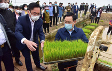 Bí thư Vương Đình Huệ xuống ruộng cùng cấy lúa, lì xì cho bà con