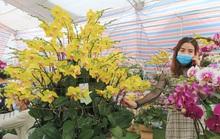 Hoa lan Trung Quốc tràn ngập, đắt đỏ ngang ngửa lan Đà Lạt