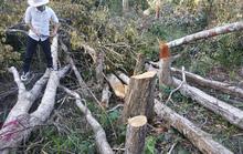 Rừng bị phá, trách nhiệm đẩy đưa