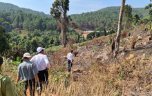 Lâm Đồng tái xuất tình trạng phá rừng phòng hộ, lấn chiếm đất