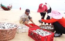 CHÙM ẢNH: Chuyến xông biển đầu năm của ngư dân Quảng Bình