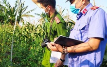 Trồng hàng trăm cây cần sa để… nuôi gia súc