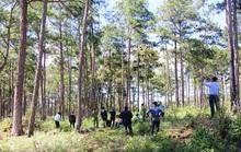 Lâm Đồng: Rừng bị hạ độc