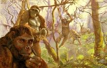 """Sốc: loài 4,4 triệu tuổi biến đổi """"nhảy vọt"""" từ tinh tinh thành con người"""