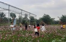 CLIP: Kỹ sư trở về từ Israel thiết kế ruộng hoa hút hồn giới trẻ miền Tây