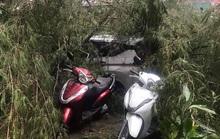 Xe máy, ôtô bị cây đè trong cơn mưa dông trái mùa ở TP HCM