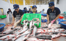 Campuchia huỷ lệnh cấm nhập khẩu cá tra Việt Nam sau khi Bộ Công Thương vào cuộc