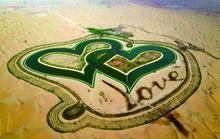 Tìm tình yêu giữa lòng sa mạc.