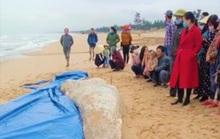 Cá voi trắng nặng 2 tấn chết trôi dạt vào bờ biển Quảng Bình