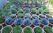 Vườn rau sân thượng có nhiều giống lạ