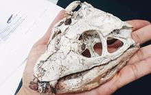 Quái thú thời khủng long sống sót đến ngày nay nhờ biến hình khó tin