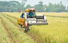 Doanh nghiệp - nông dân: Bắt tay cùng làm giàu