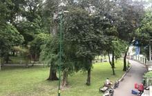 Xã hội hóa để tăng công viên, cây xanh
