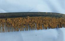 Nhiều thông tin trên chiếc lược được chôn cùng hài cốt liệt sĩ vừa tìm thấy ở Quảng Trị
