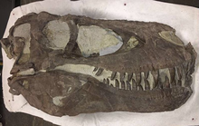 Phát hiện mộ tập thể của khủng long - sói khủng khiếp nhất mọi thời đại