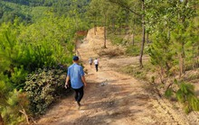 Quảng Bình: Lâm trường bảo kê cho doanh nghiệp khai thác đất trái phép?