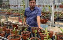 Ông chủ vườn lan Phạm Đình Đô chia sẻ về giá trị lan đột biến