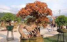Mãn nhãn với gần 1.000 tác phẩm tại triển lãm sinh vật cảnh ở Bình Định