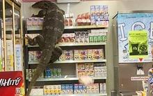 Clip: Thằn lằn khổng lồ gây náo loạn cửa hàng Thái Lan