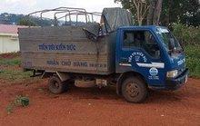 Trộm 3 con bò rồi… thuê xe tải chở đi tiêu thụ