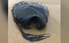 Mỹ: Cá quái vật hiếm có bất ngờ trôi dạt vào bờ