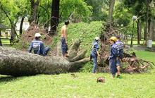 Khám bệnh cho cây trước mùa mưa