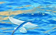 Mùa cá chuồn bay