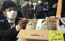 Nhật Bản: Cặp dưa lưới Yubari được đấu giá gần nửa tỉ VNĐ